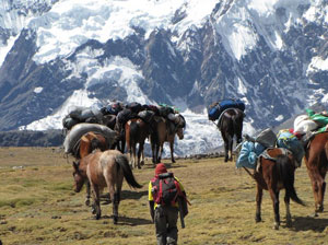 image of pack horses during expedition in Andes Mountains, RIEEE, Baker Perry